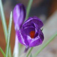 Всех дам с 8-м Марта! Весны, тепла, радости, хорошего настроения, любви и здоровья :: Olga