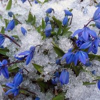 Весна, и показались......... :: Василий Платонов