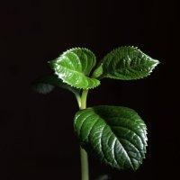 Первые зеленые росточки потянулись к Солнцу :: Damir Si