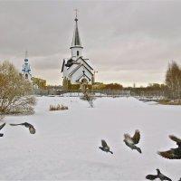 церковь и голуби :: Елена