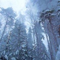 зима в лесу :: Mavr -