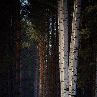 Весенний лес :: Павел Сухоребриков