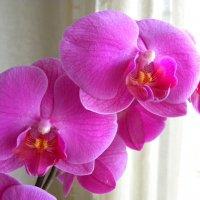 мир спасёт красоту :: Ludmila Juhimec