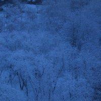 деревья в снегу :: нестор сидоров
