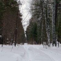 январский лес. :: Елена Тренкеншу