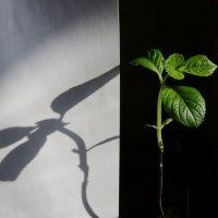 Свет и тень :: Damir Si