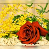 Гордая роза и простая....мимоза :: galina tihonova