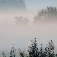 Метаморфозы тумана :: Юрий Цыплятников