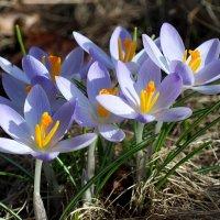 +16, 8 марта :: Swetlana V