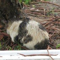 Кот под дождем :: Герович Лилия