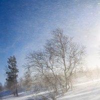 На северном склоне :: Игорь Чубаров