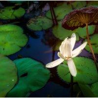 Игра света и воды!!! Куала Лумпур.Малайзия...В пруду посреди мегаполиса. :: Александр Вивчарик