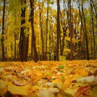 Осенний ковёр :: Михаил Танин
