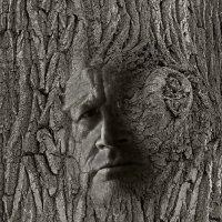 лик  дерева :: Galina