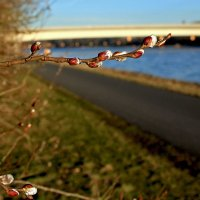 Весна на озёрах :: Alexander Andronik