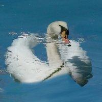 Отражение купается в пруду... :: Наталья