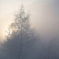 Пробуждение... :: Sergey Apinis