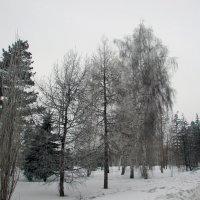 *** :: раиса Орловская