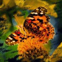 Бабочка :: Цветков Виктор Васильевич