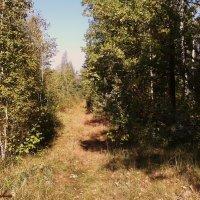 Сентябрь в лесу :: °•●Елена●•° Аникина♀