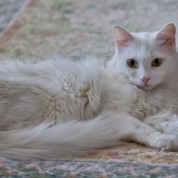 София-моя любимая старая кошка :: Val Савин