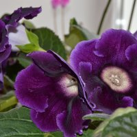 цветок на окне :: сергей