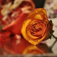 Роза чайная... :: Юленька Шуховцева*