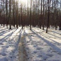 Img_2866 - А там еще птички пели! Почуяли весну! :: Андрей Лукьянов