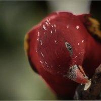 Перекус однако!!! Куала-Лумпурский парк птиц...Малайзия. :: Александр Вивчарик