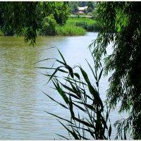 Склонились ветви над рекой... :: Тамара (st.tamara)