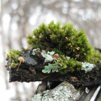 Весна, первые цветы. :: Лена Минакова