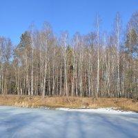 Озеро в лесу :: Магомед Маг