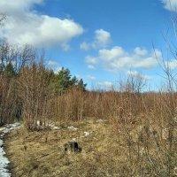 Тропинка в лесу запахла весной... :: Александр Резуненко