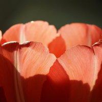 Цветной бокал весны :: Swetlana V