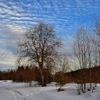 Дерево на фоне неба :: Александр Преображенский