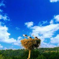 Аист на крыше, Мир на земле :: Вячеслав Буруков