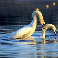 Cтрасти на озере :: Alexander Andronik