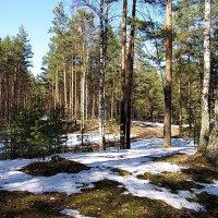 Просыпаются Мещёрские леса... :: Лесо-Вед (Баранов)