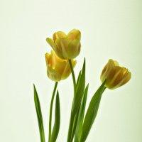 Весна... пока на подоконнике :: Оксана Исмагулова
