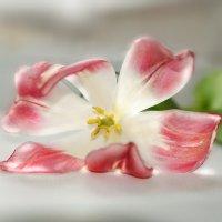 весны цветочные шаги :: Lena
