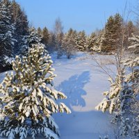 зимний полдень :: сергей