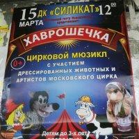 Хаврошечка в Подмосковных Котельниках на Белой Даче... :: Ольга Кривых