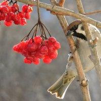 - Ах какие ягодки !!!!!! :: Hаталья Беклова