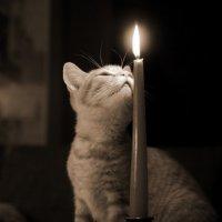 мой кот - романтик :: Ingwar