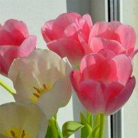 """Тюльпаны из серии """"Весна на подоконнике"""" :: Евгения Бакулина"""