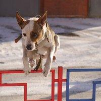 Прыжок :: Ольга Рав