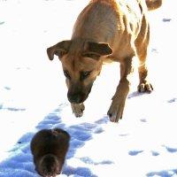 охота нападение :: petyxov петухов