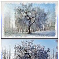 Пушистое дерево - трио :: Татьяна Губина