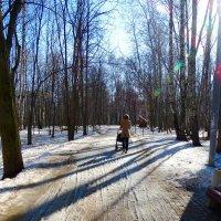 Прогулки по парку :: Светлана Лысенко