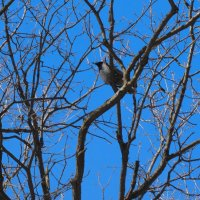 Про небо, март, дерево и ворону :: Светлана Лысенко